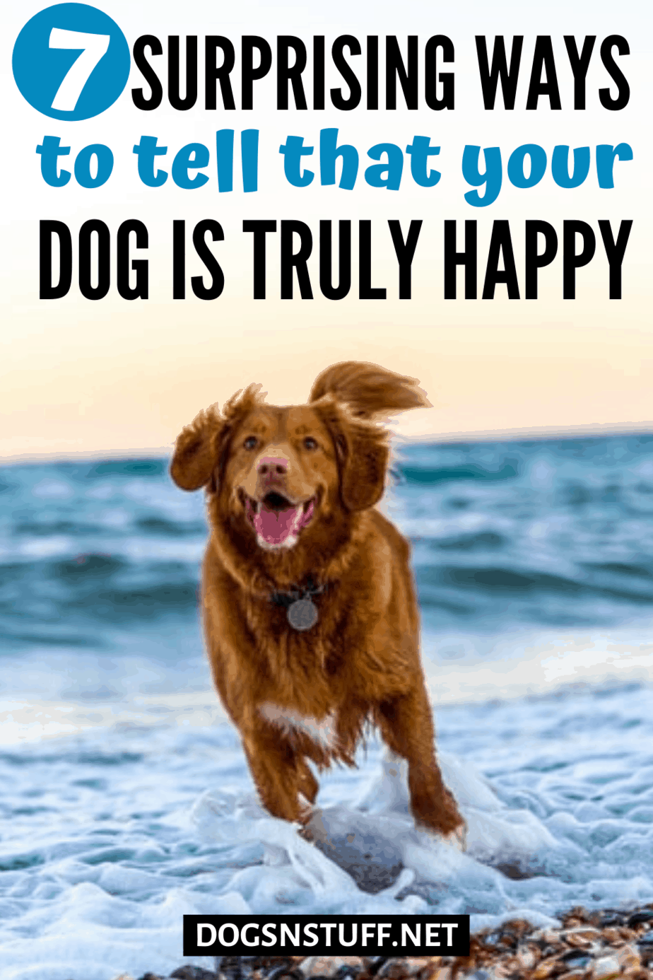 How to tell if a dog is happy