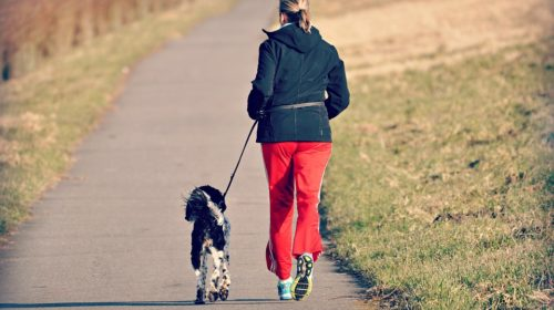 8 Surprising Benefits of Having a Dog in Your Life!