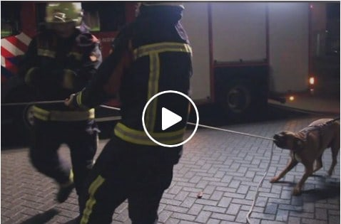 A totally untrained dog helps fire men to combat fire