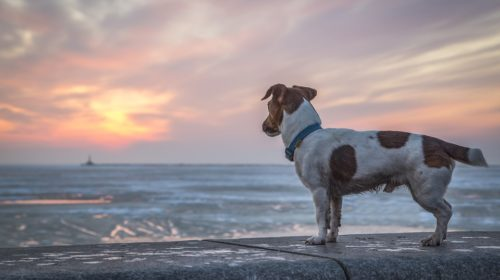 10 Things to Do If You Lose Your Dog on A Walk