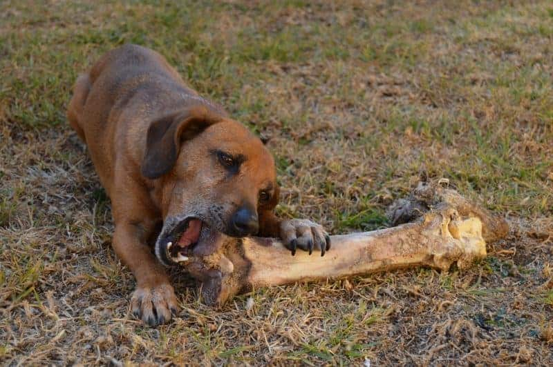 what bones are good for dogs