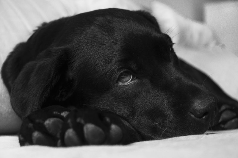 What Can You Give Your Dog For Pain and What You Shouldn't