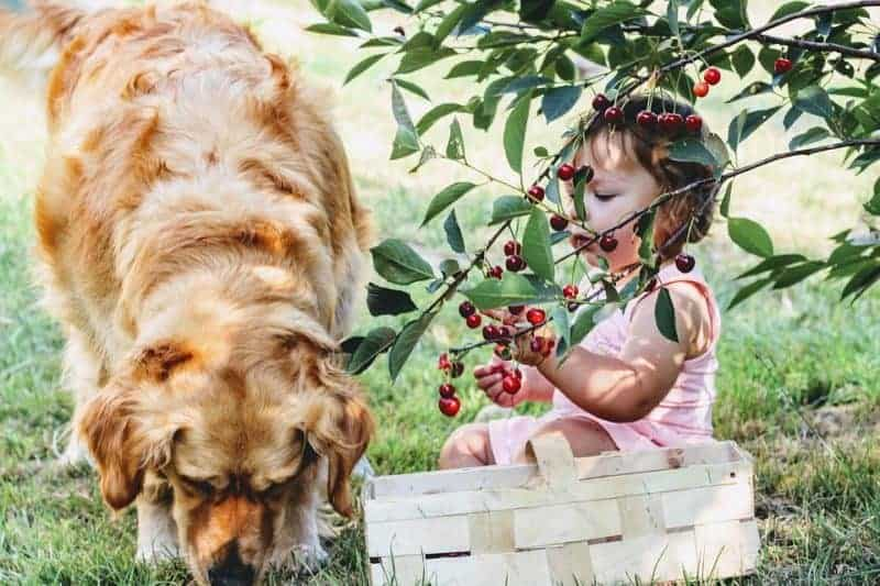 what fruits are bad for dogs