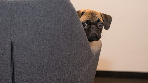 7 Sounds That Terrify Your Dog