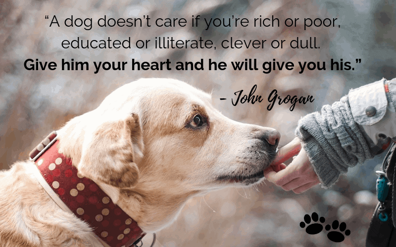 """A dog doesn't care if you're rich or poor, educated or illiterate, clever or dull. Give him your heart and he will give you his."" - 30 Inspiring Dog Quotes That Will Surely Melt Your Heart"
