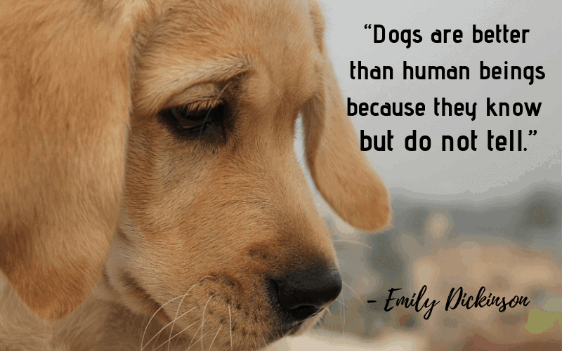 """Dogs are better than human beings because they know but do not tell."" - 30 Inspiring Dog Quotes That Will Surely Melt Your Heart"