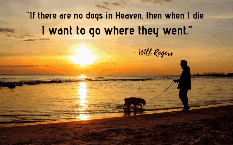 """If there are no dogs in Heaven, then when I die I want to go where they went."" - 30 Inspiring Dog Quotes That Will Surely Melt Your Heart"