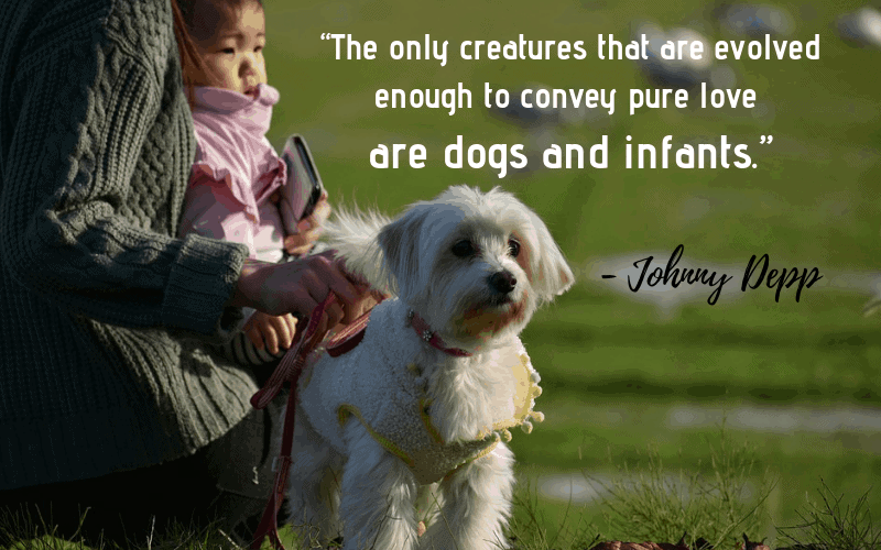 """The only creatures that are evolved enough to convey pure love are dogs and infants."" - 30 Inspiring Dog Quotes That Will Surely Melt Your Heart"
