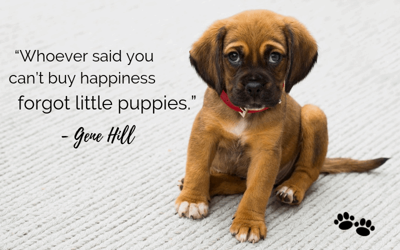 """Whoever said you can't buy happiness forgot little puppies.""- 30 Inspiring Dog Quotes That Will Surely Melt Your Heart"