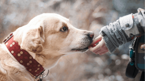 30 Inspiring Dog Quotes That Will Surely Melt Your Heart