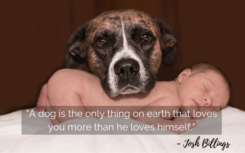 """A dog is the only thing on earth that loves you more than he loves himself.""- 30 Inspiring Dog Quotes That Will Surely Melt Your Heart"