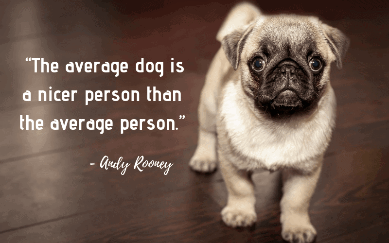 """The average dog is a nicer person than the average person."" - 30 Inspiring Dog Quotes That Will Surely Melt Your Heart"