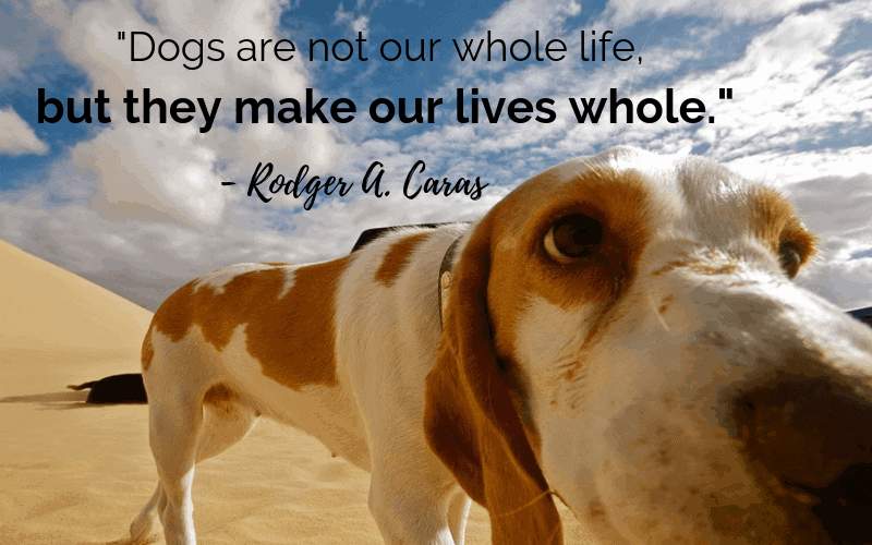 """Dogs are not our whole life, but they make our lives whole."" - 30 Inspiring Dog Quotes That Will Surely Melt Your Heart"