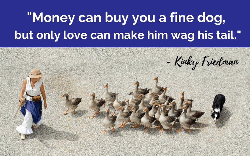 """Money can buy you a fine dog, but only love can make him wag his tail.""- 30 Inspiring Dog Quotes That Will Surely Melt Your Heart"