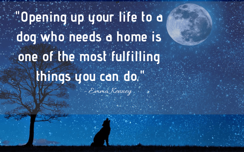 """Opening up your life to a dog who needs a home is one of the most fulfilling things you can do."" - 30 Inspiring Dog Quotes That Will Surely Melt Your Heart"