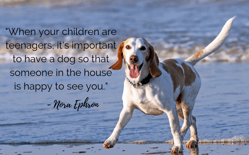 """When your children are teenagers, it's important to have a dog so that someone in the house is happy to see you."" - 30 Inspiring Dog Quotes That Will Surely Melt Your Heart"