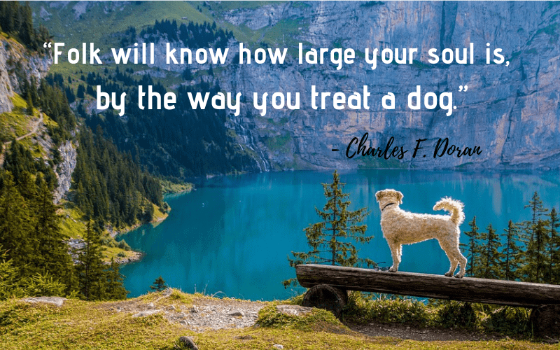 """Folk will know how large your soul is, by the way you treat a dog."" - 30 Inspiring Dog Quotes That Will Surely Melt Your Heart"