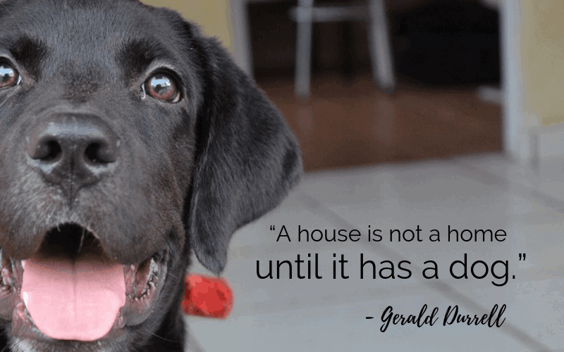 """A house is not a home until it has a dog."" - 30 Inspiring Dog Quotes That Will Surely Melt Your Heart"