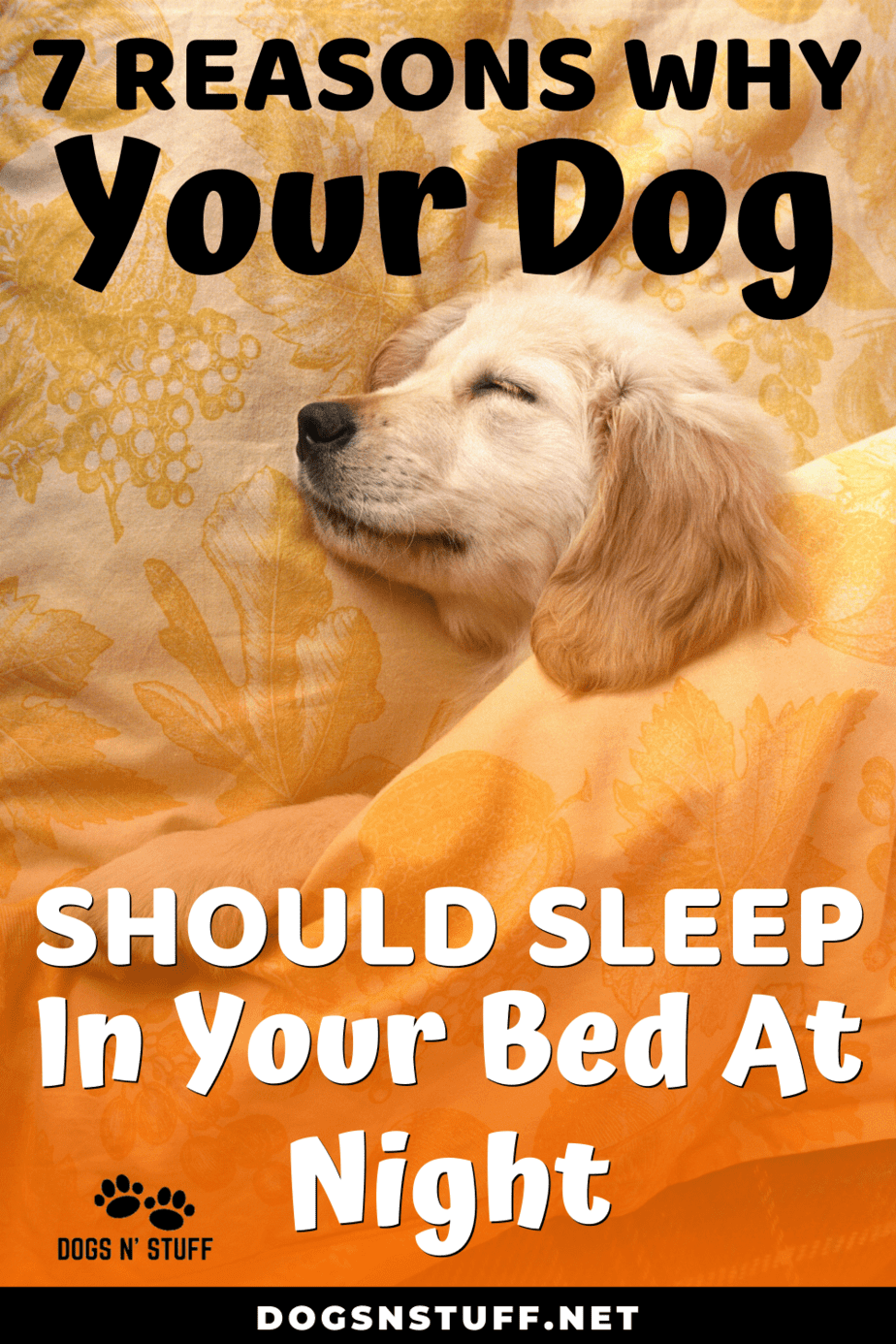 Letting your dog sleep in your bed at night