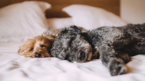 7 Amazing Reasons Why Your Dog Should Sleep In Your Bed At Night