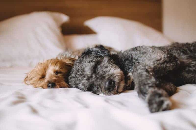 Reasons Why Your Dog Should Sleep In Your Bed At Night
