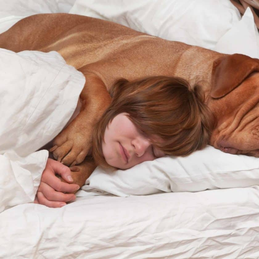 dog-sleep-in-bed