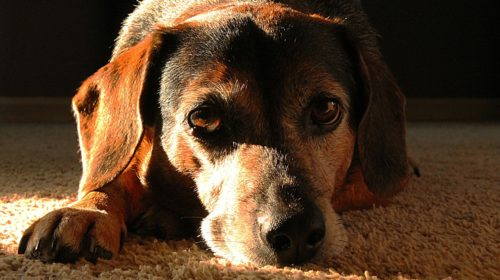 11 Ways To Tell If Your Dog Is Sad Or Upset