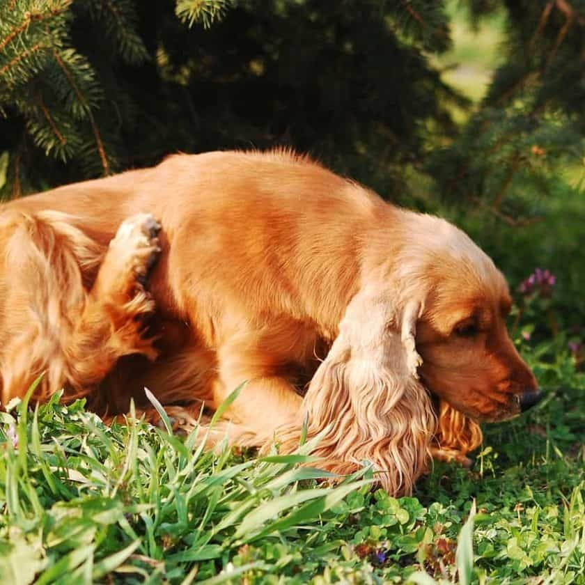 dog itchy skin treatments