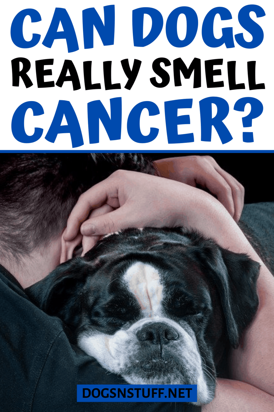 can dogs smell cancer