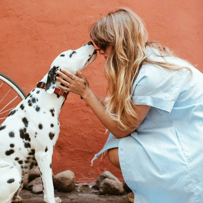 Rubbing your dog ears means you love them