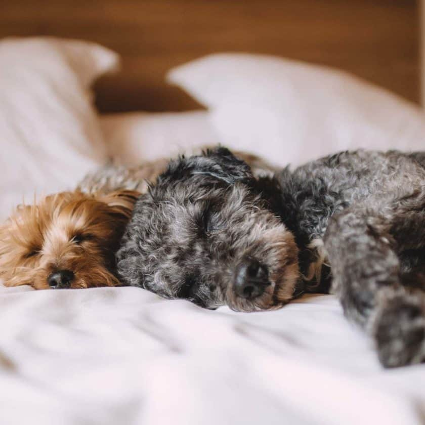 Dog Sleeping Positions - Back-to-back