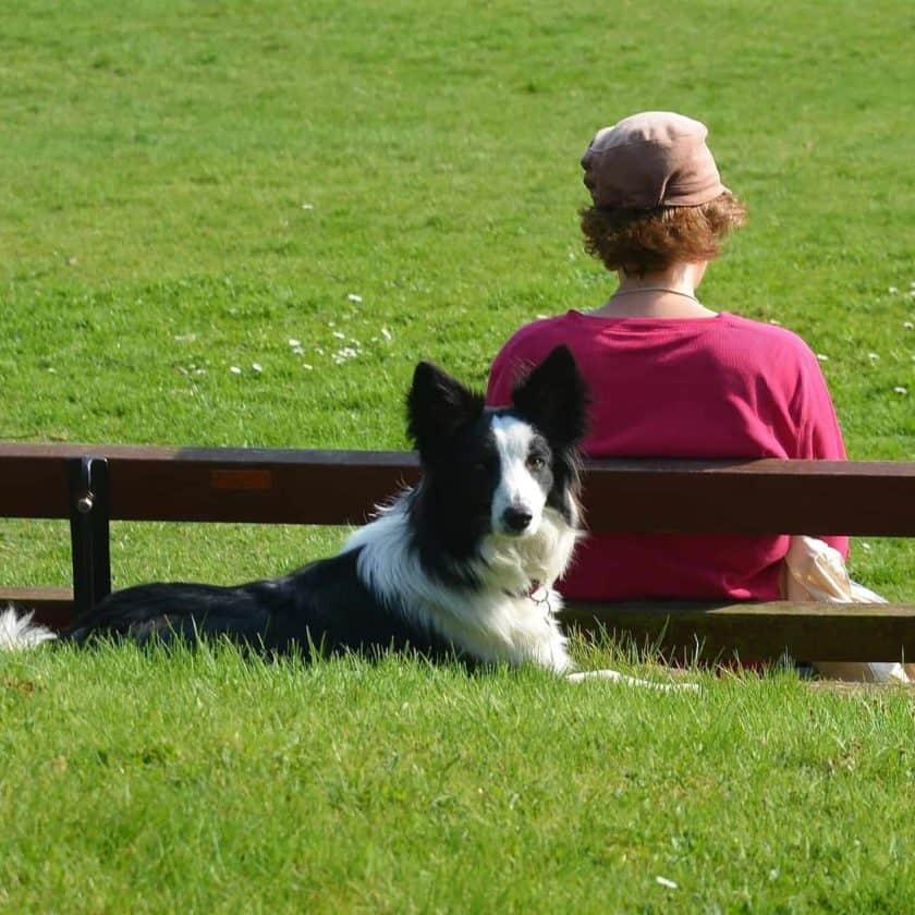 Criteria to qualify for a psychiatric service dog