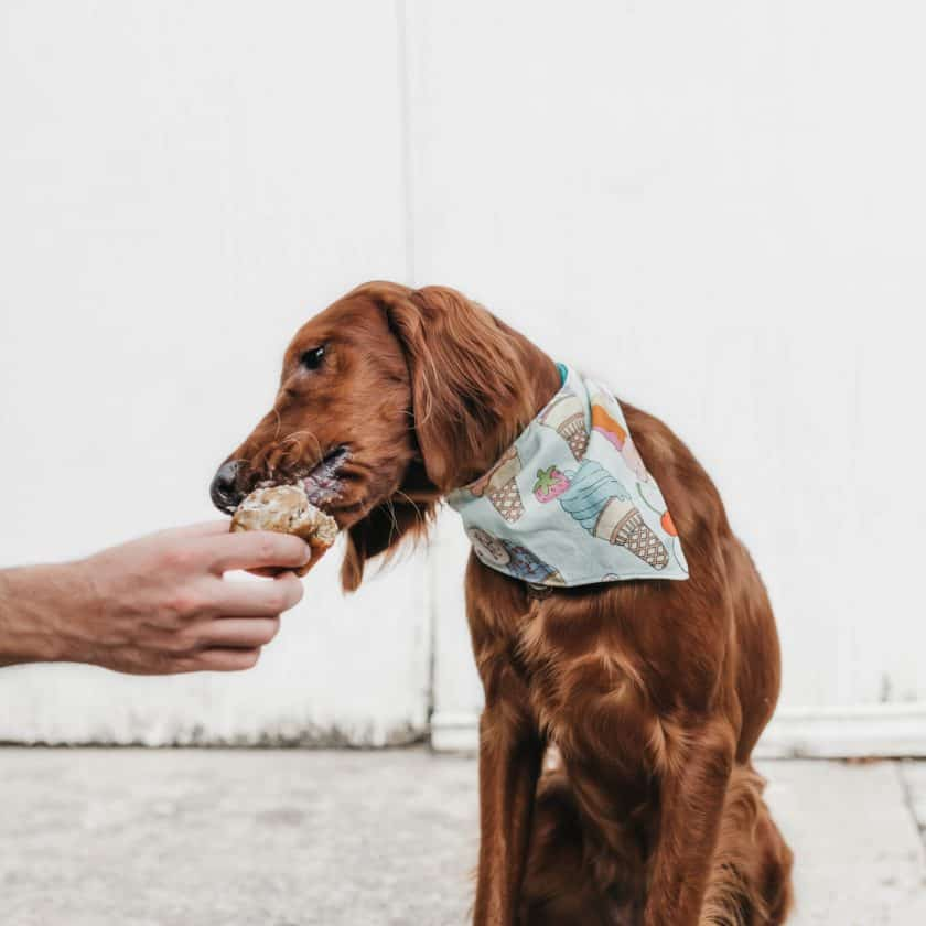 Why dogs lick: You taste good