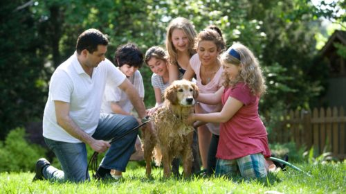 Keeping the Family Dog through the Hardest of Financial Times