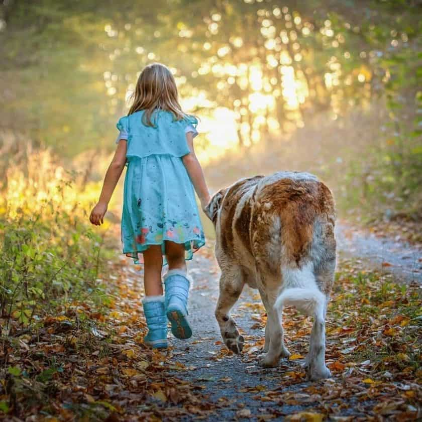 Dog will follow you everywhere if he loves you