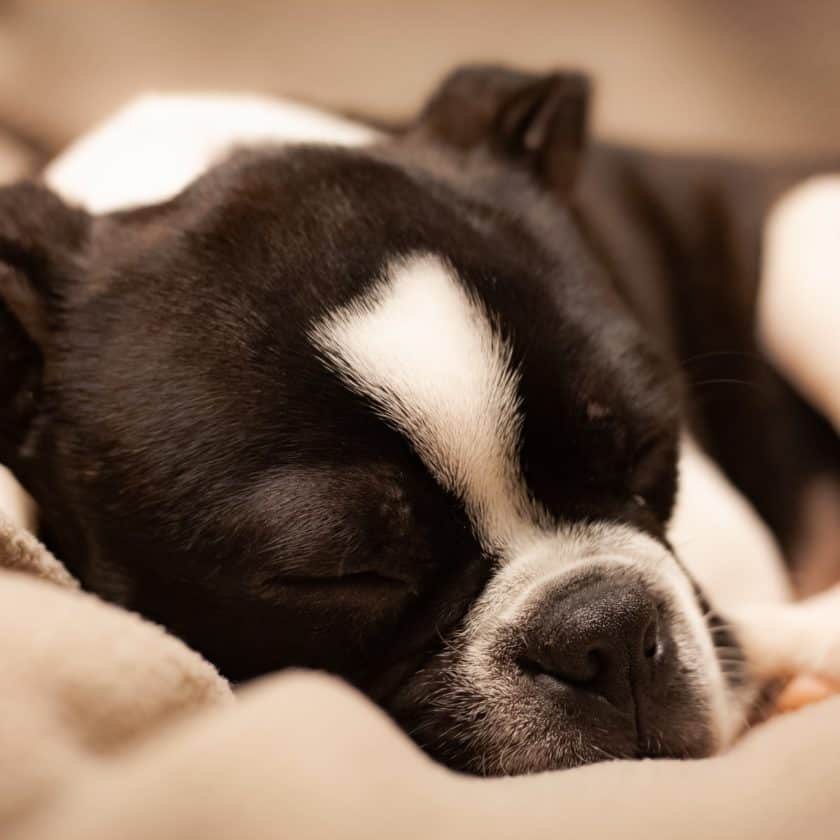 Do dogs dream about their owners?