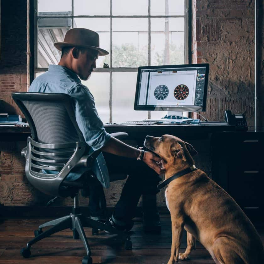 Tips to Survive Working from Home with a Puppy  - Train your puppy to be independent