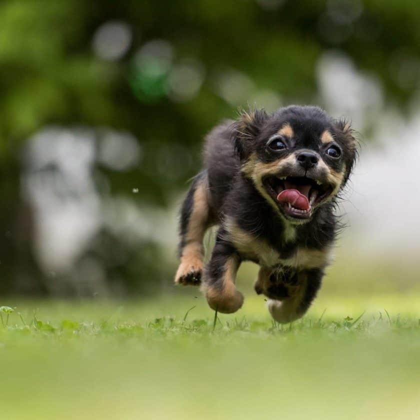being playful is a sign that a dog is happy