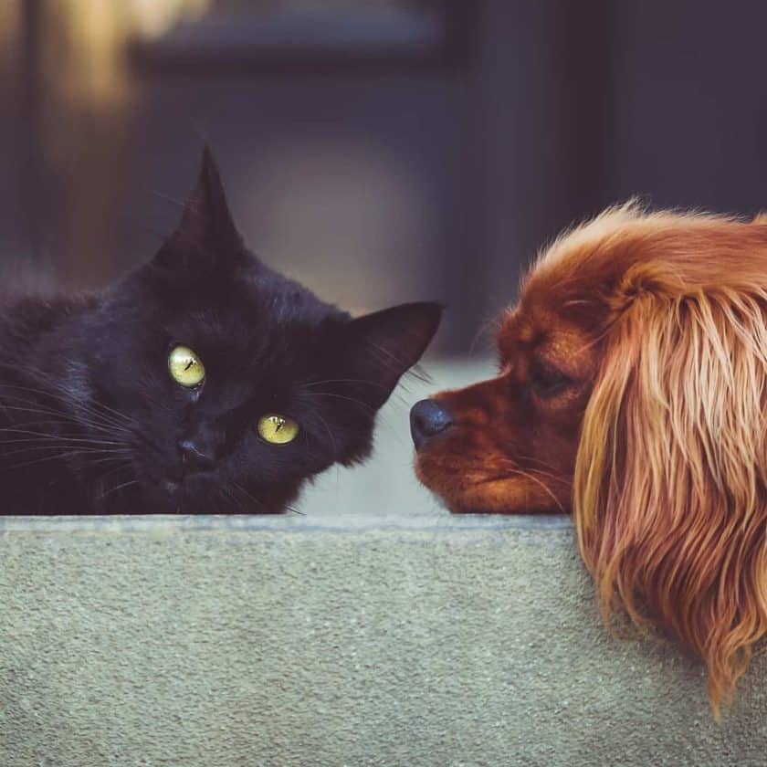 Your dog may also become jealous of a new pet but will soon overcome these feelings once a bond is established.