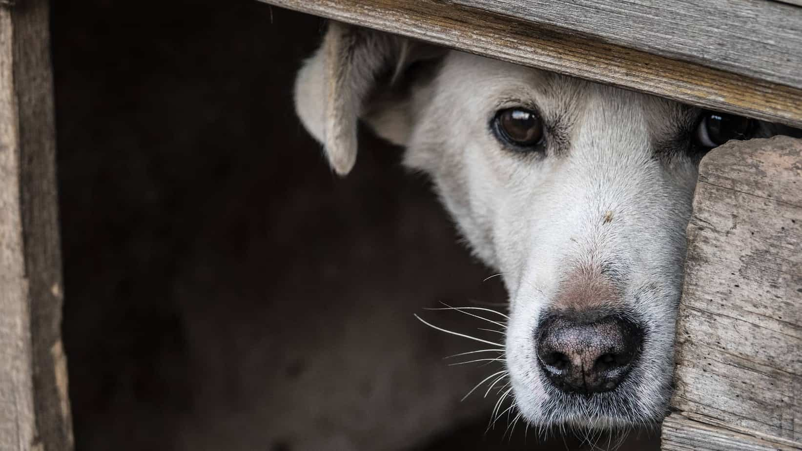 11 Ways To Tell If Your Dog Is Sad Or Upset: Moving house
