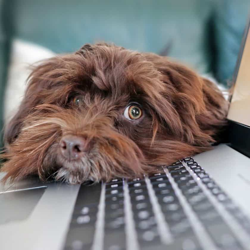 Tips to Survive Working from Home with a Puppy - Set a routine