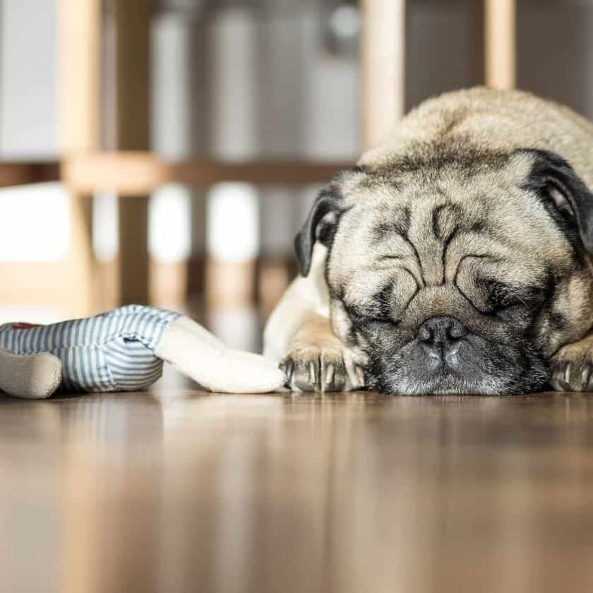 11 Ways To Tell If Your Dog Is Sad Or Upset - sleeping more than usual