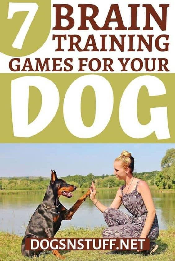 Dog training to Drop it