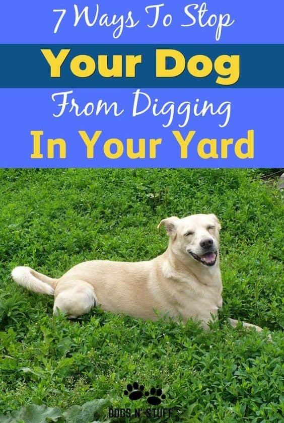 How to stop a dog from digging holes in your yard