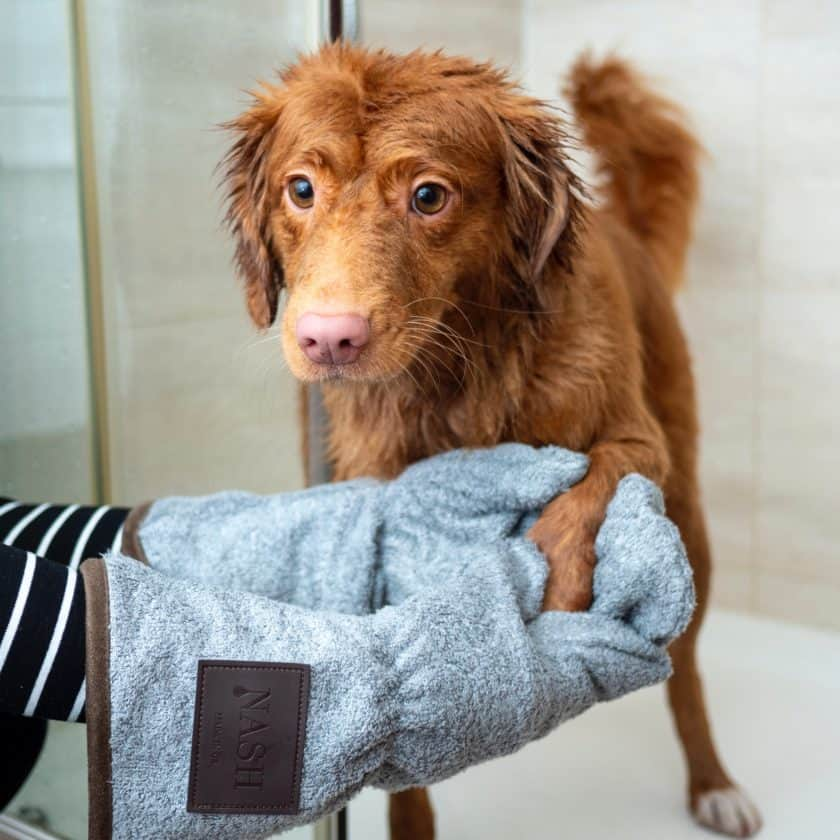 Do dog grooming if you can't afford to take care of your dog