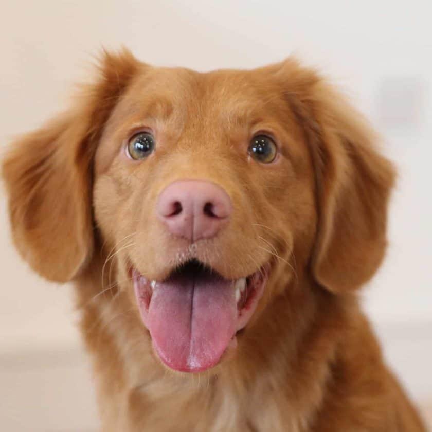 Reward your puppy's good behavior