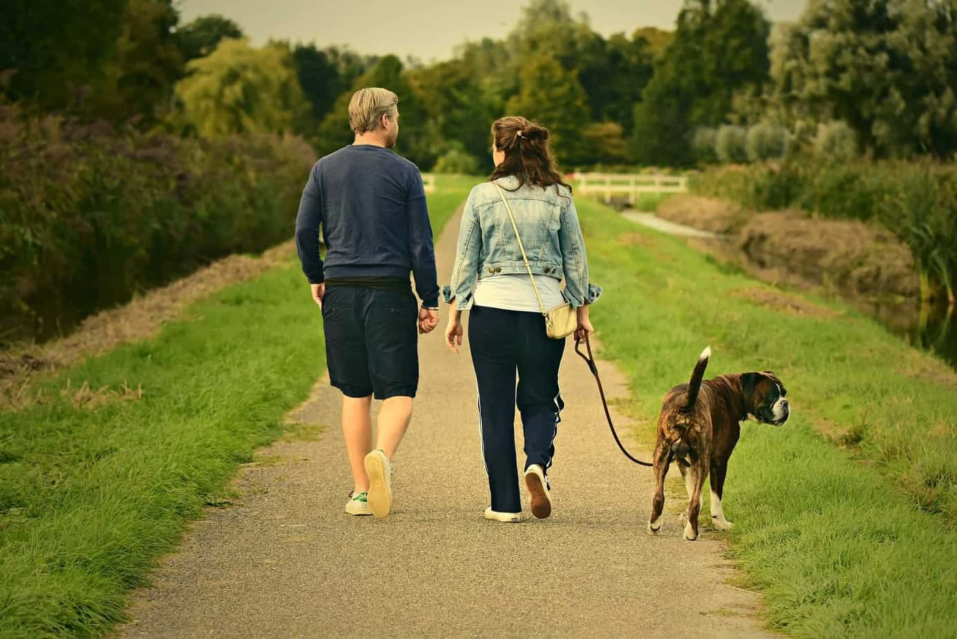 Keep a healthy lifestyle for your dog