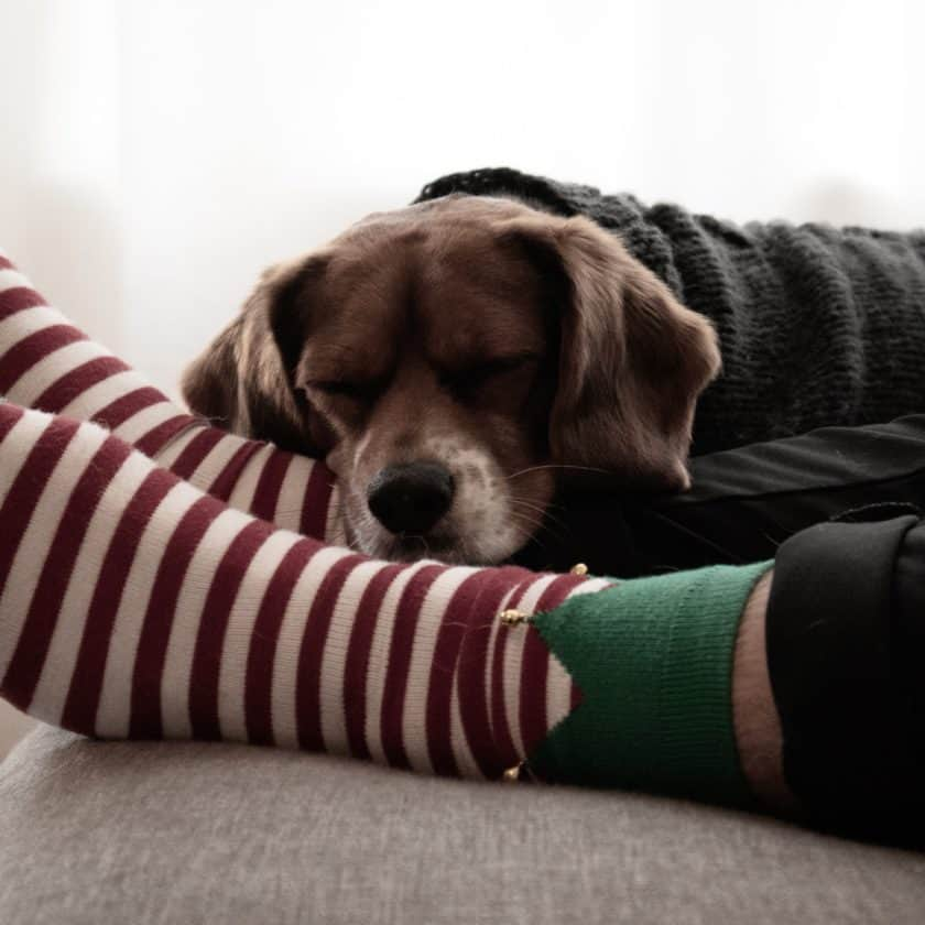 Tips to Survive Working from Home with a Puppy - Keep them occupied