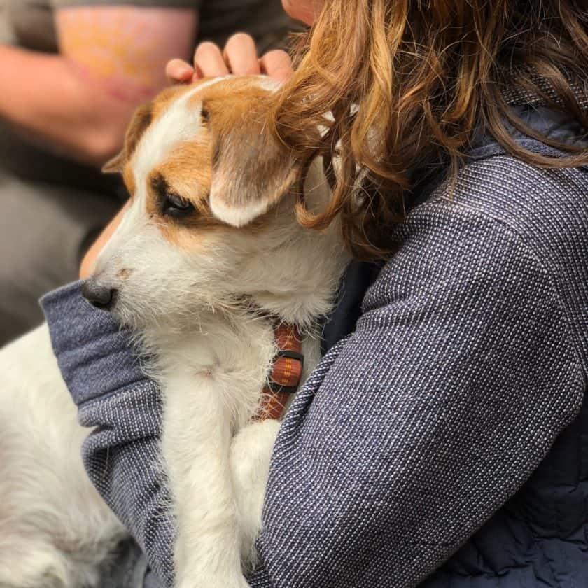 Is it OK to hug your dog?