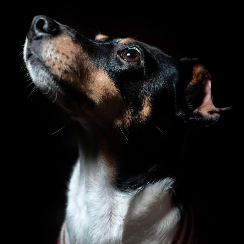 When humans cry, their dogs also feel distress.